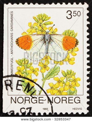 Postage stamp Norway 1993 Orange Tip Butterfly, Anthocaris Carda