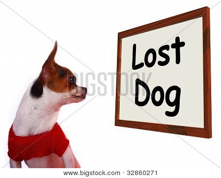 Lost Dog Sign Showing Missing Or Runaway Puppy
