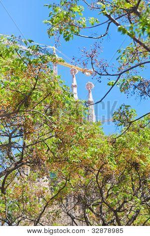 Green Tree  In Barcelona In Spring