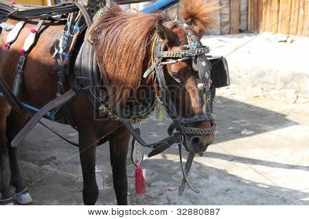 draft animals horse