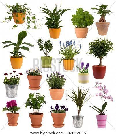 Flowers and plants in pots isolated on white background