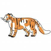 Sketchy Inked Tiger Big Cat Vector Illustration. Free Hand Drawn Endangered Jungle Wildlife Clipart, poster