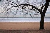 The Lone Tree And The Iced Sea In Chicago Winter poster