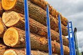 A Logging Truck With Blue Bars Carries Several Freshly-cut Tree Logs. The Wood Is Ready For Transpor poster