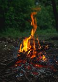 Bonfire In Forest On Green Dark Background. Small Romantic Fire Flames. Wood Campfire. Bright Color. poster
