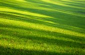 Leaves Falling From Tree On Green Grass. Shadow With Tree On Green Lawn. Field Background With Green poster