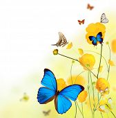 stock photo of cosmos flowers  - Beautiful flower background with exotic butterflies - JPG
