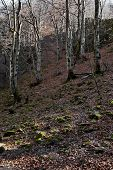 Autumn View Toward The Labyrinth Of The Teteven Balkan With High Peaks, Glade And Deciduous Forest,  poster