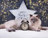 Cat. Christmas Party, Winter Holidays Cat With New Year Symbols. New Year Cat. poster