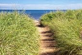 stock photo of dune grass  - Sandy path to the beach over sand dunes with beach grass - JPG