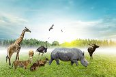 Wildlife Conservation Day Wild Animals To The Home. Or Wildlife Protection poster