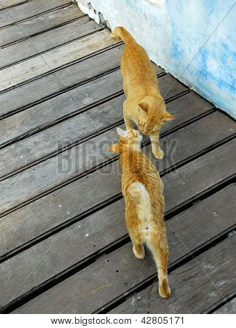 Ginger Cat Kissing
