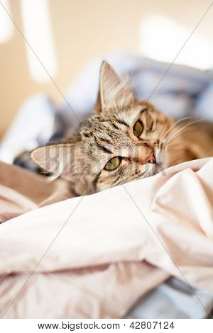 cat relaxes and dreams on a bed