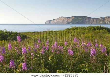 Wildflowers In Gaspe