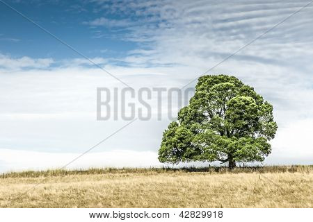 An image of a beautiful south australia tree
