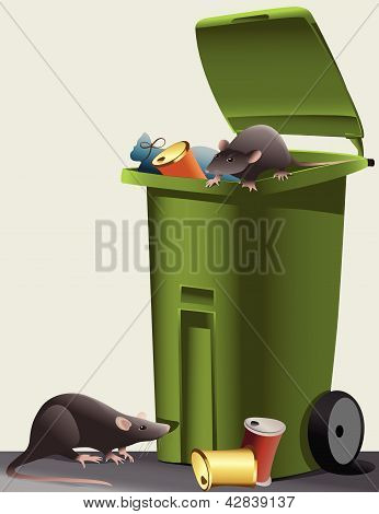 Rats in the rubbish dump