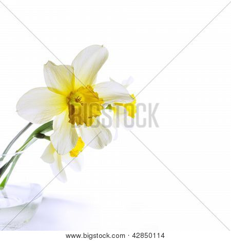 Narcissus In A Glass Vase