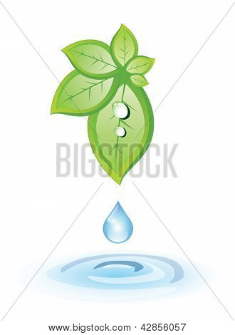 Green leaves and blue drop above water