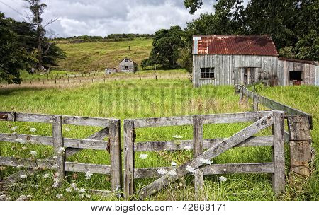 Farm Coromandel Peninsular NZ