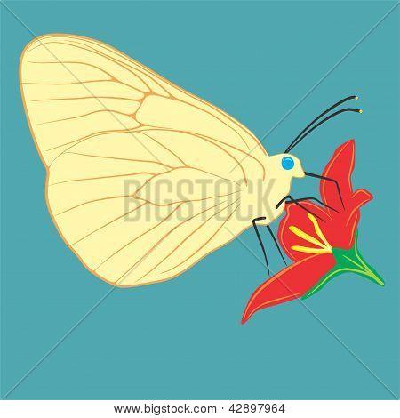 40 Butterflies 4