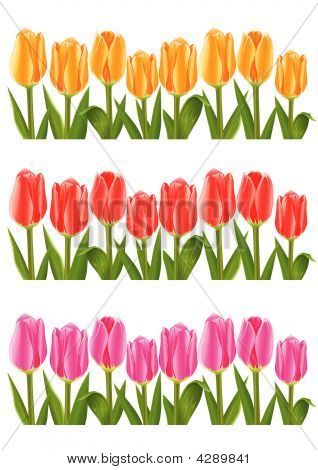 Colour Tulip Flowers Set