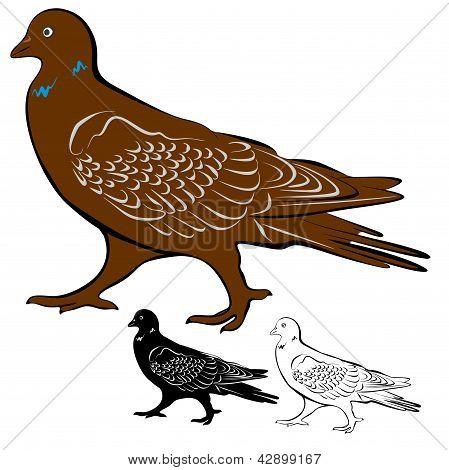 Pigeons (1-re)2-7.eps