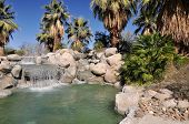 picture of gushing  - Palm trees grow around a small pool of water at a city park in Palm Desert - JPG