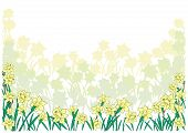 foto of narcissi  - Illustration of abstract narcissi border with background - JPG