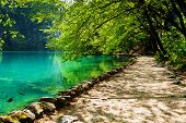 stock photo of cloud forest  - Path near a forest lake with fish in Plitvice Lakes National Park Croatia - JPG