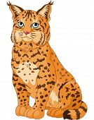 stock photo of bobcat  - Illustration of wild bobcat - JPG