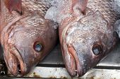 foto of red snapper  - Red Snapper Fish Heads on a market stall - JPG
