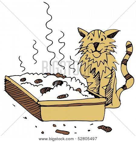 An image of a dirty litter box and cat.