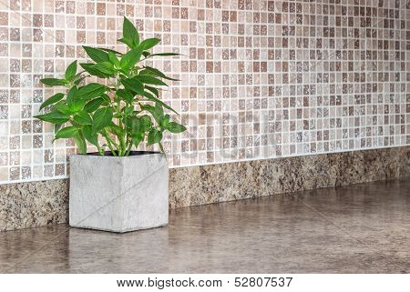 Green Mint On Kitchen Countertop