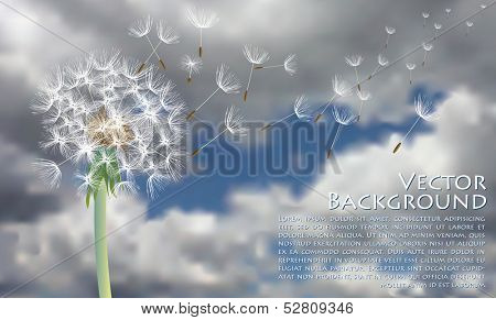 vector dandelion with flying seeds on stormy sky