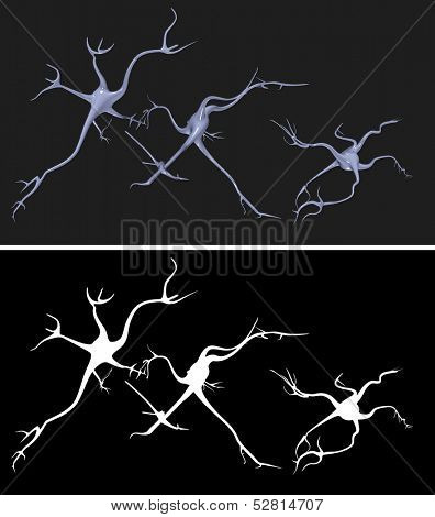 Nerve cells with alpha mask for easy extraction