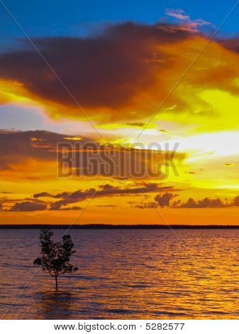 Dramatic Ocean Sunset With Single Mangrove Tree