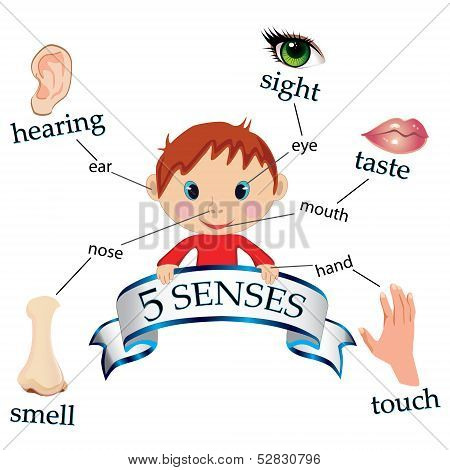 5 senses educational concept