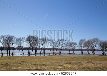 trees on  river