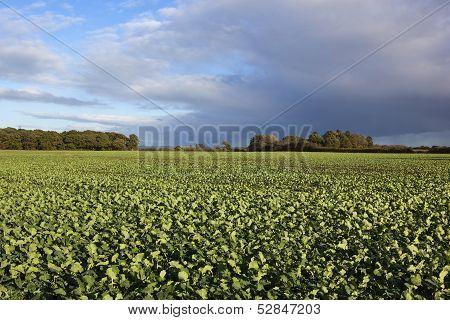 Autumn Agriculture
