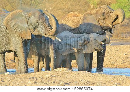 Elephant - Wildlife background from Africa - Family time of mud and water