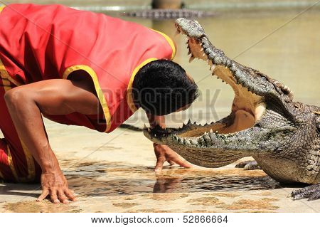Show Of Crocodiles/head Into The Jaws Of A Crocodile