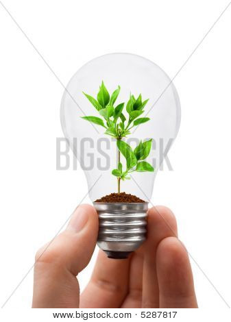 Hand With Lamp And Plant