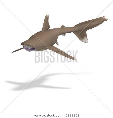 Oceânico tubarão Marracho