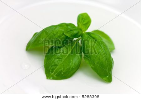 Mint Leaves On The White Plate , Close Up