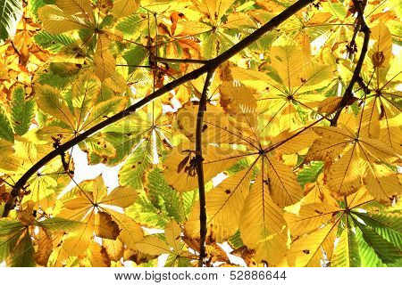 yellow leaves with autumn color