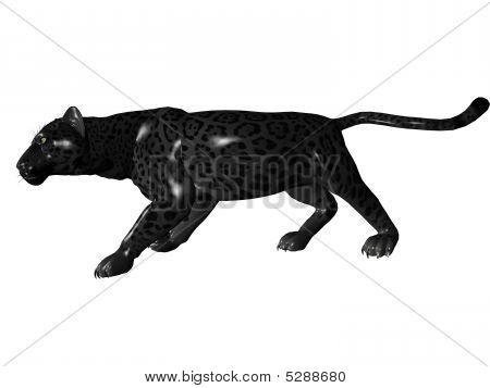 Stalking Black Panther