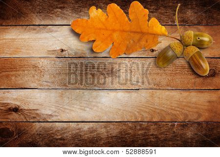 Old Grunge Paper With Autumn Oak Leaves And Acorns On The Abstract Background