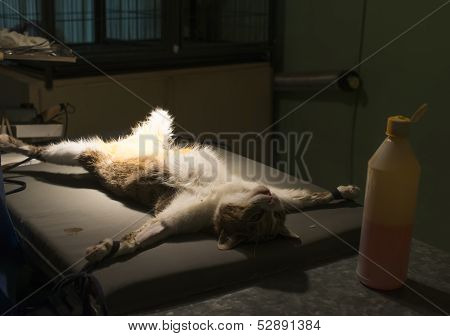 Cat In A Veterinary Surgery
