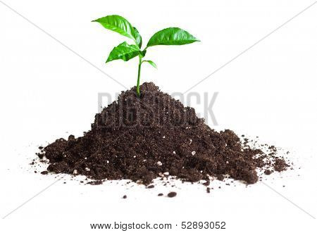 green sprout grown on soil isolate
