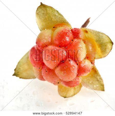 Single fresh cloudberry ( Rubus chamaemorus) close up macro  isolated on white background